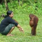 La dignità dell'orango