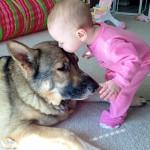Deconstructing se si preferisce un cane a un bambino